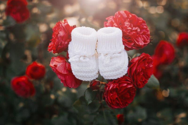 Montantes brancos feitos a mão para o bebê recém-nascido colocado nas rosas vermelhas imagem de stock royalty free