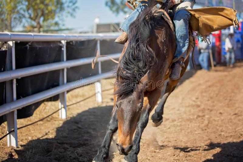 Montar a caballo Bucking a pelo del Bronc en el rodeo del país imagen de archivo