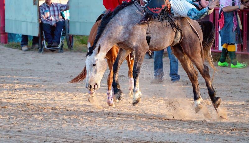 Montar a caballo Bucking a pelo del Bronc en el rodeo del pa?s fotos de archivo libres de regalías