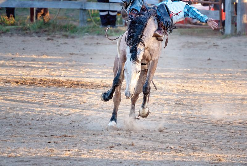 Montar a caballo Bucking a pelo del Bronc en el rodeo del pa?s foto de archivo