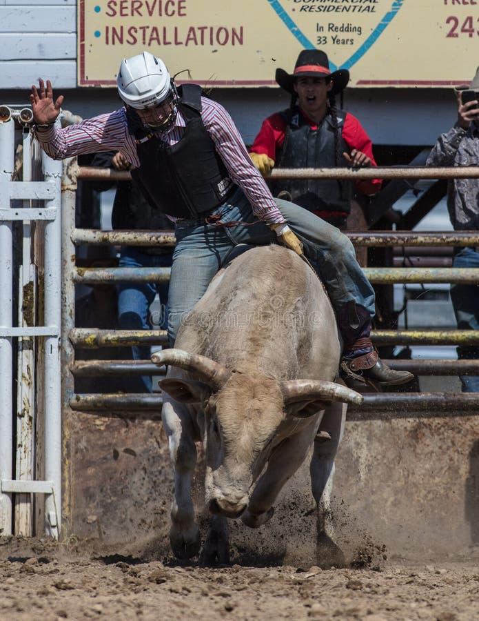Montar a caballo Bull imágenes de archivo libres de regalías