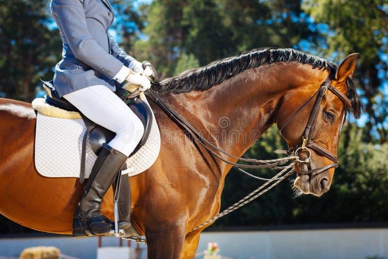 Montar a caballo cariñoso del hombre de negocios rico que se sienta en caballo oscuro fotografía de archivo