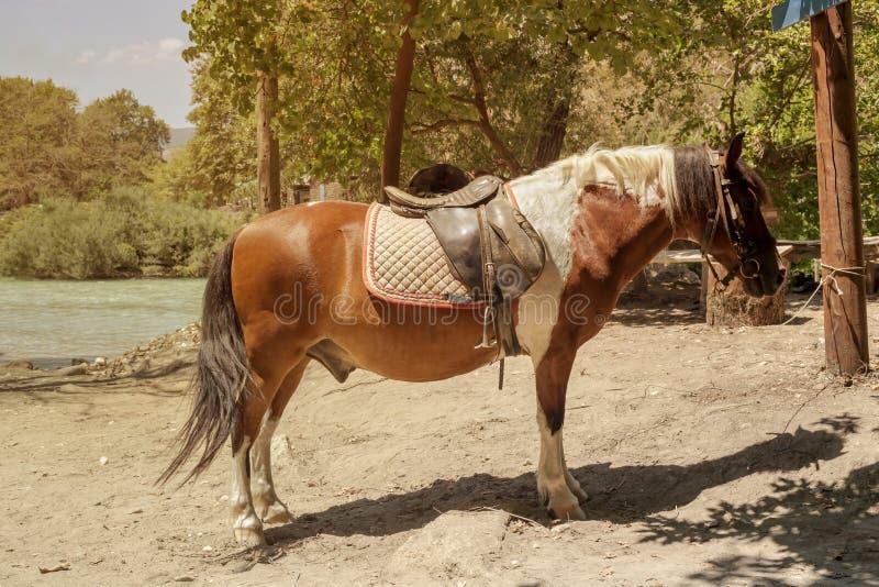 Montar a caballo cerca del río Epirus, Grecia de Acherontas fotos de archivo libres de regalías