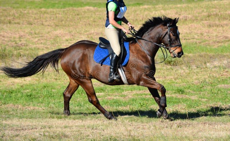 Montar a caballo del campo a través fotos de archivo