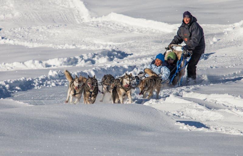 Montar a caballo del trineo del perro, Suiza imagenes de archivo