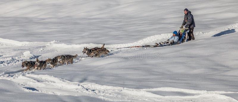 Montar a caballo del trineo del perro, Suiza III fotografía de archivo libre de regalías