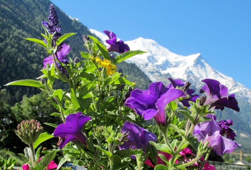 Montblanc sikt från den Chamonix dalen till och med blommor royaltyfria foton