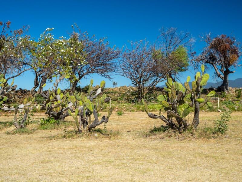 Monte奥尔本,瓦哈卡,墨西哥,南美:[古老Zapotec市在山顶部,联合国科教文组织最大的废墟  库存照片