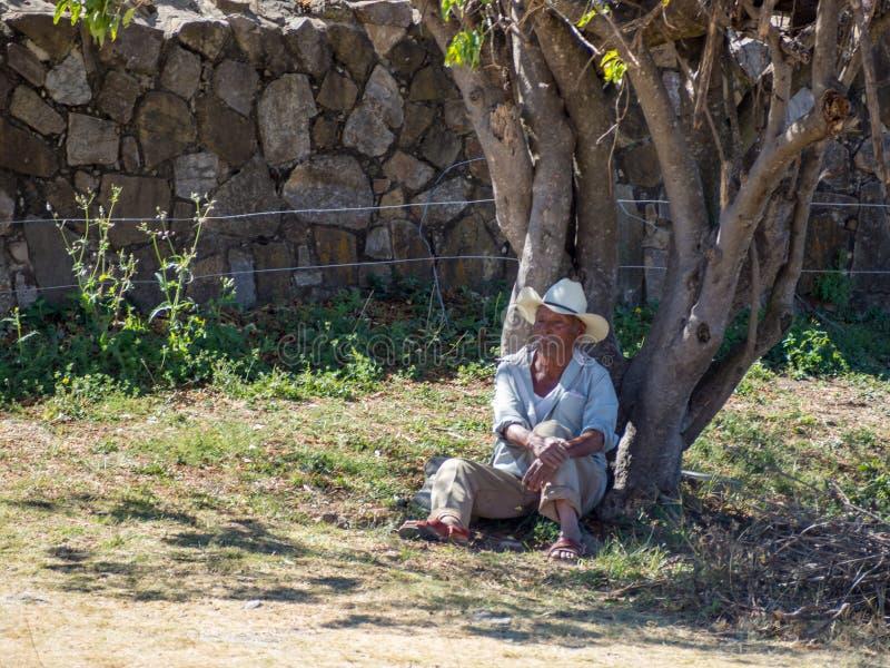 Monte Alban, Oaxaca, Messico, Sudamerica: [Uomo messicano in cappello che pone sotto l'albero, riposare, vendente i ricordi, somb fotografia stock