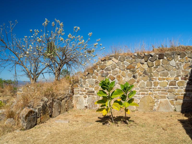 Monte Alban, Oaxaca, Mexico, Zuid-Amerika: [Grootste ruïnes van oude Zapotec-stad bij de bovenkant van de berg, UNES stock fotografie