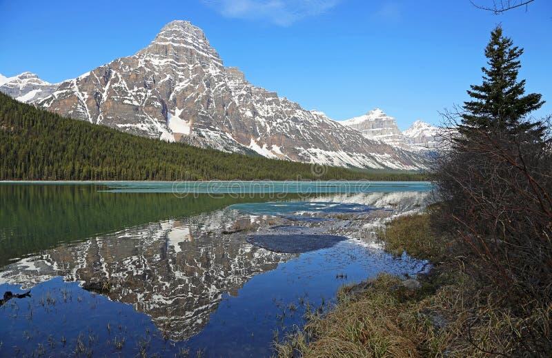 Monte Chephren no Lago Waterfowl e na árvore do abeto foto de stock royalty free