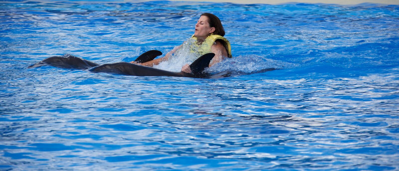 Monte d'un dauphin photos libres de droits