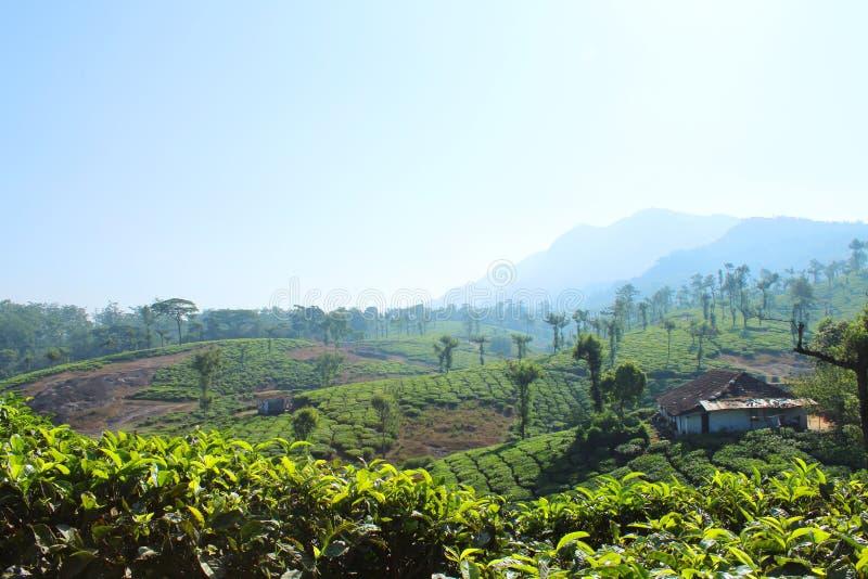 Monte da propriedade do chá verde com nuvem limpa fotografia de stock