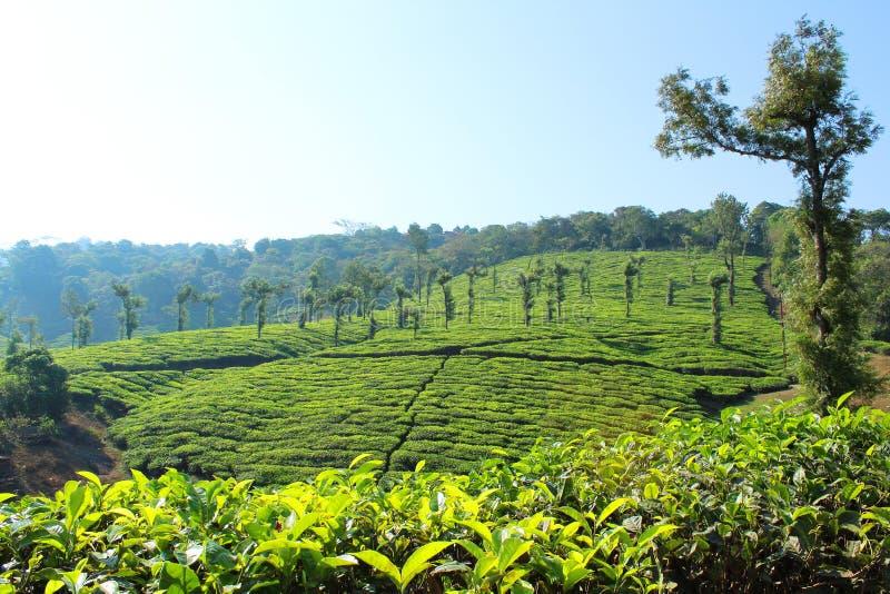 Monte da propriedade do chá verde com nuvem limpa imagem de stock