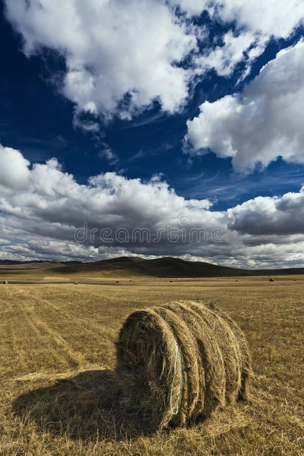 Download Monte de feno foto de stock. Imagem de agricultura, outdoor - 16850298