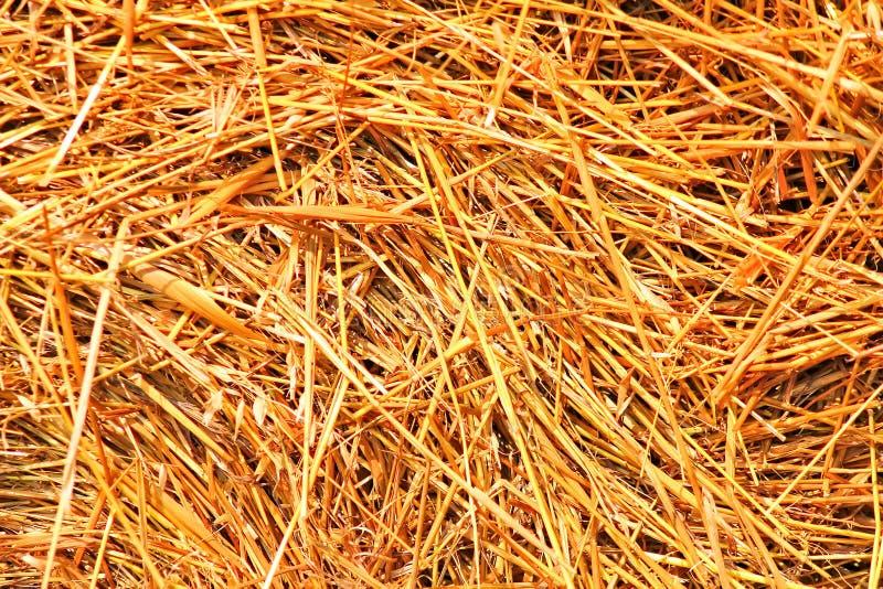 Monte de feno chanfrado, verão, palha envolvida no campo fotos de stock