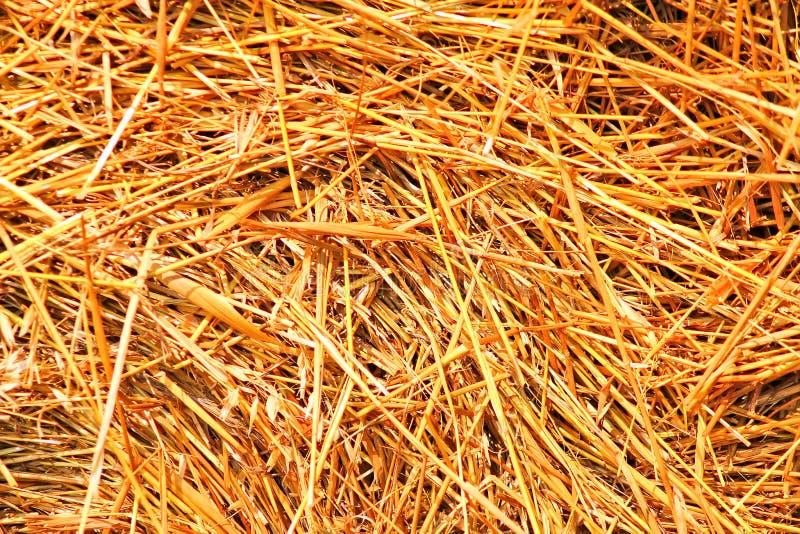 Monte de feno chanfrado, verão, palha envolvida no campo foto de stock royalty free