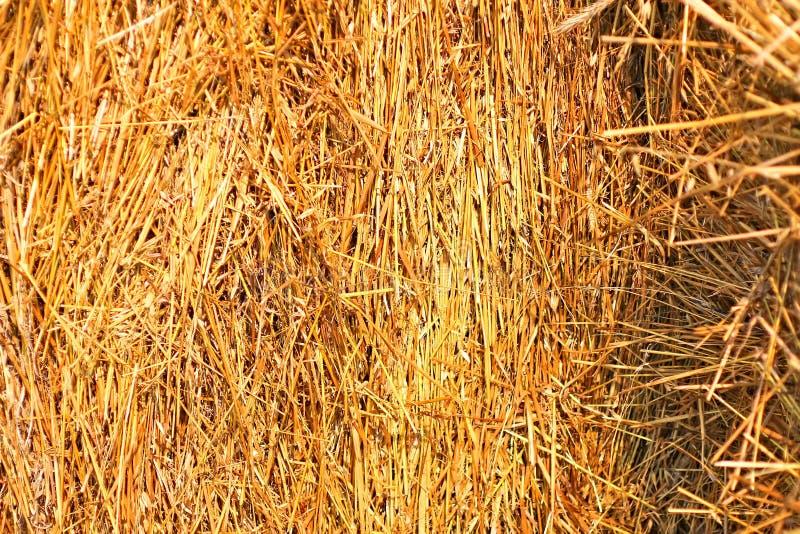 Monte de feno chanfrado, verão, palha envolvida no campo imagens de stock