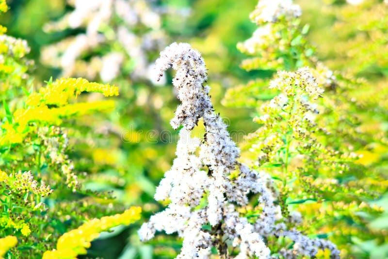 Monte de feno chanfrado, verão, palha envolvida no campo fotografia de stock