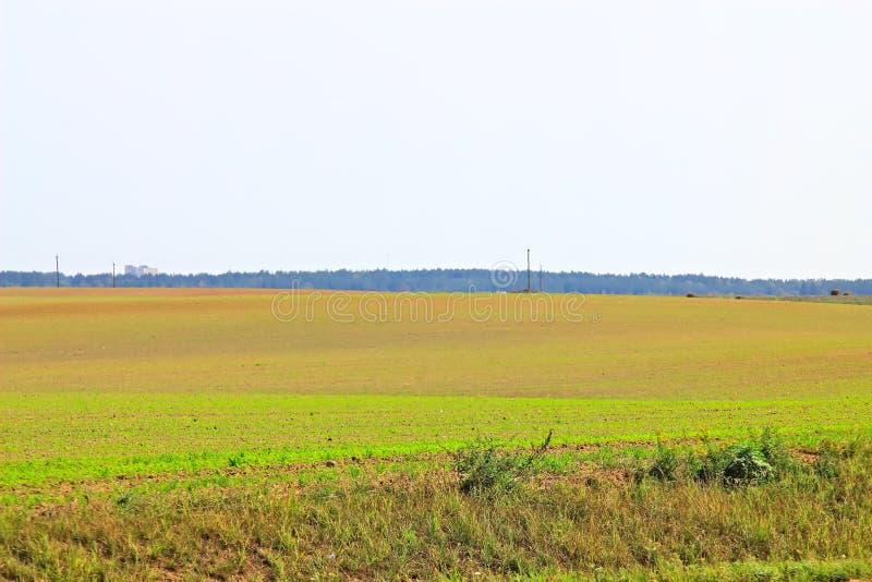 Monte de feno chanfrado, verão, palha envolvida no campo imagem de stock