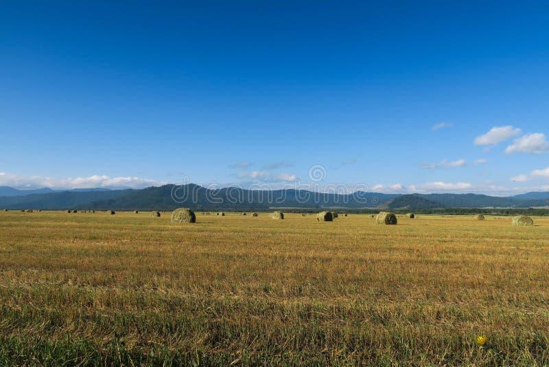 Monte de feno no campo agr?cola Altai, R?ssia foto de stock