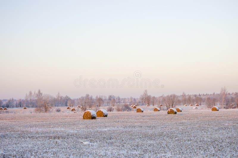 Monte de feno no campo congelado foto de stock