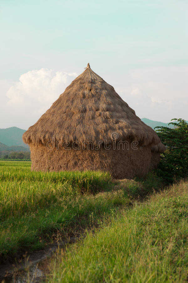 Monte de feno no campo do arroz de Tailândia foto de stock