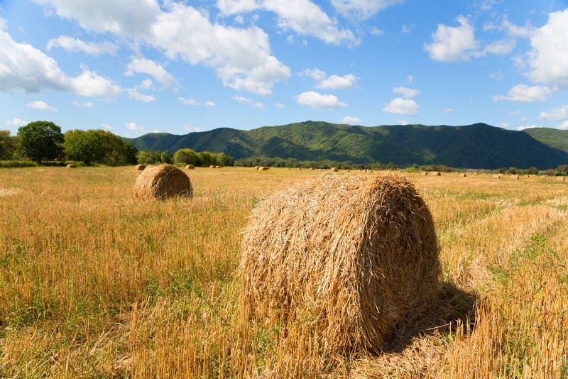 Monte de feno no campo na queda fotografia de stock