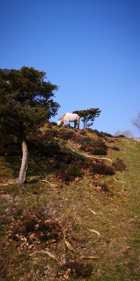 Monte do OM do cavalo fotos de stock royalty free
