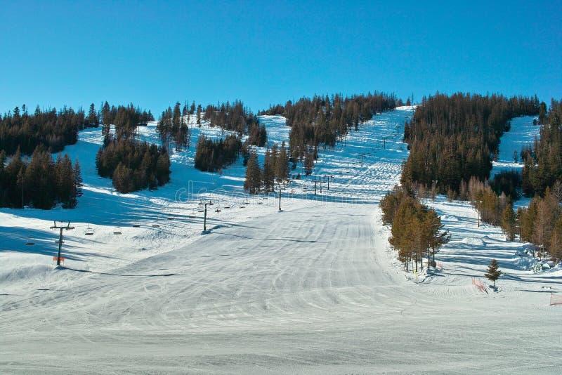 Monte e árvores do esqui imagem de stock