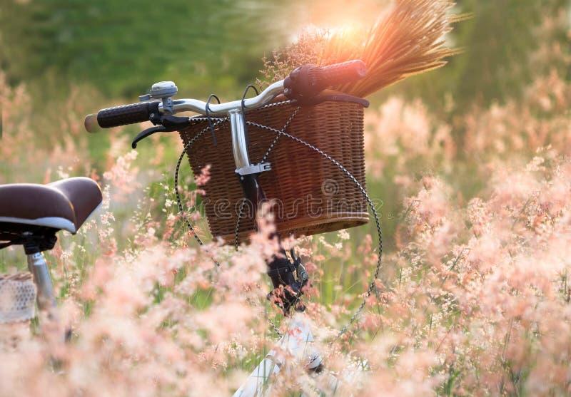 Monte en bicicleta con la cesta y el guita de flores en prado, imagenes de archivo