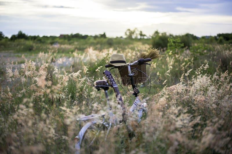 Monte en bicicleta con la cesta y la guitarra de flores en prado fotografía de archivo libre de regalías