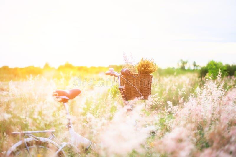 Monte en bicicleta con la cesta y la guitarra de flores en prado imagen de archivo