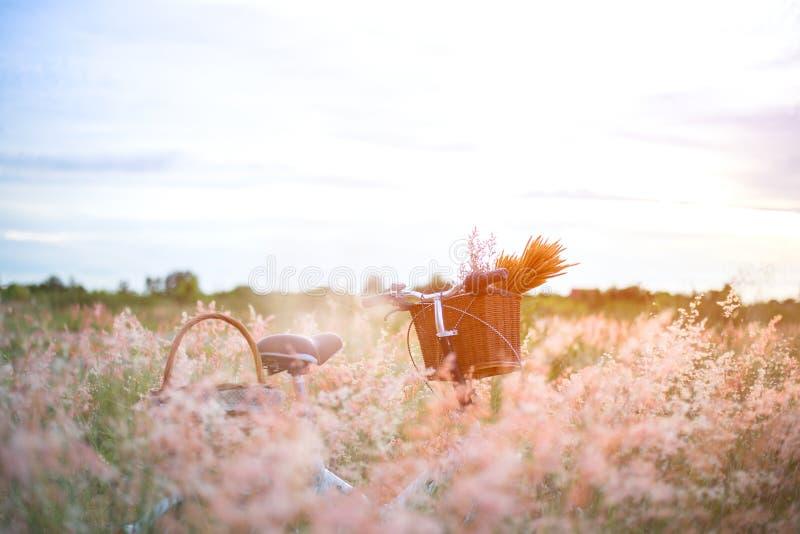 Monte en bicicleta con la cesta y la guitarra de flores en prado, fotografía de archivo