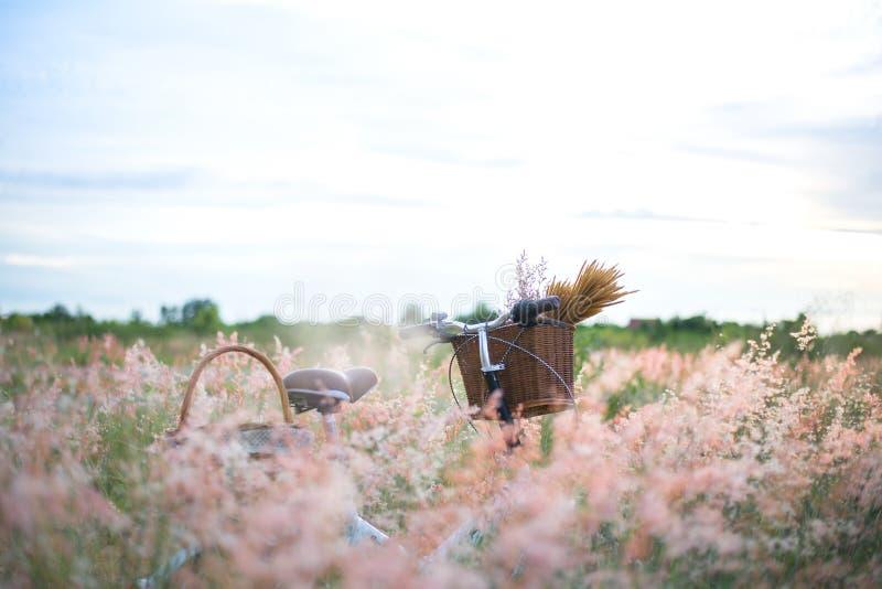 Monte en bicicleta con la cesta y la guitarra de flores en prado foto de archivo