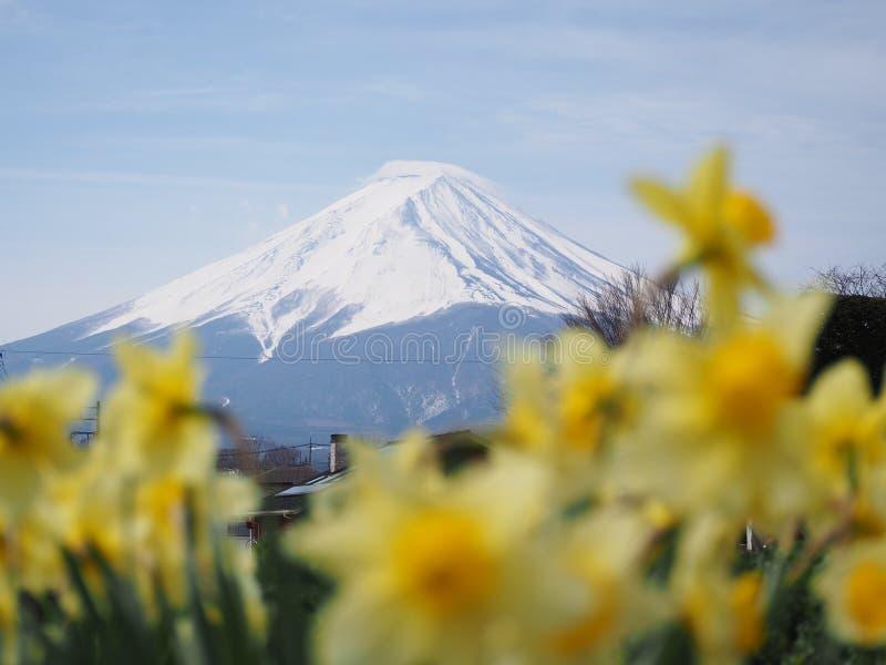Monte Fuji com as flores amarelas borradas imagens de stock royalty free