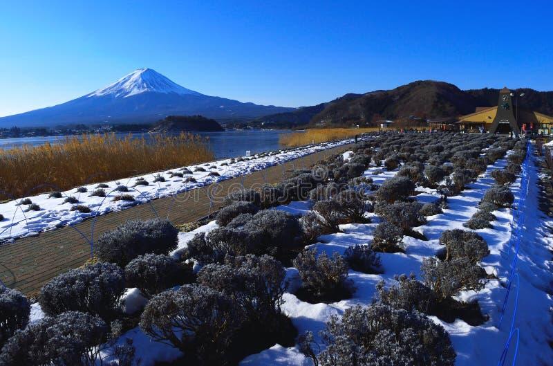 Monte Fuji da cena do inverno do lago Kawaguchi Japão fotografia de stock royalty free