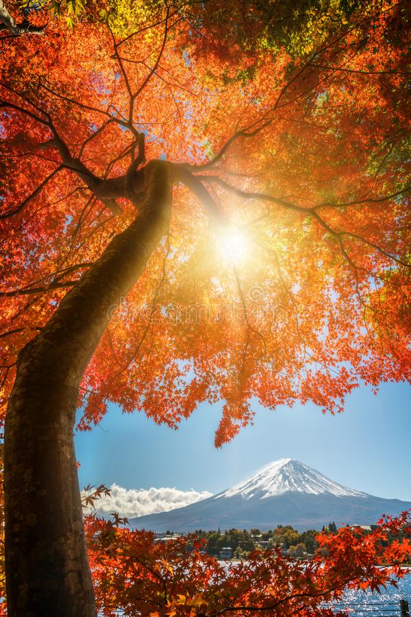Monte Fuji em Autumn Color, Jap?o fotos de stock