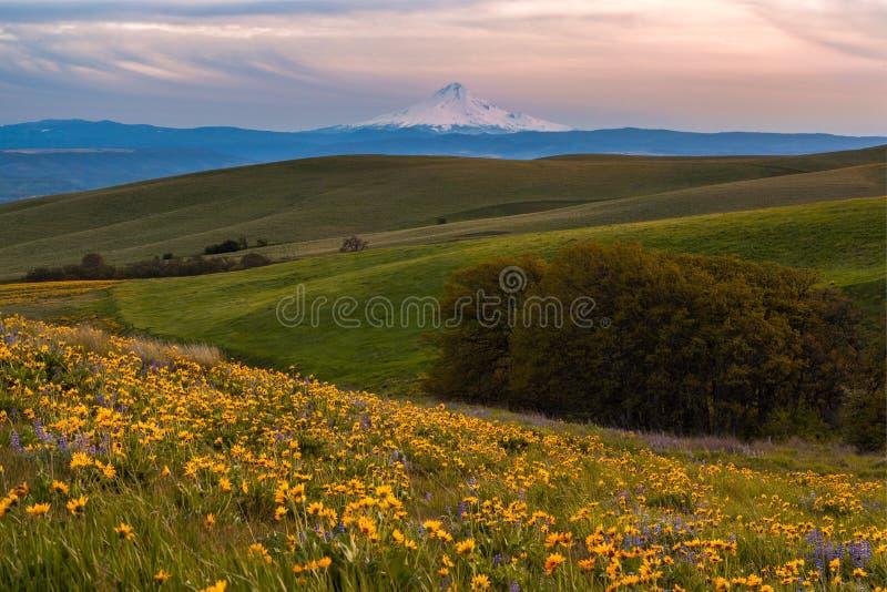 Monte la luz de cogida de la puesta del sol de la capilla y las flores salvajes archivadas en el parque de estado de Columbia Hil foto de archivo libre de regalías
