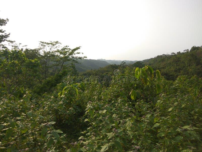 Monte verde fotos de stock