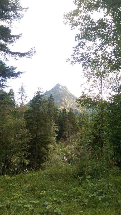 Monte verde 2 imagens de stock royalty free