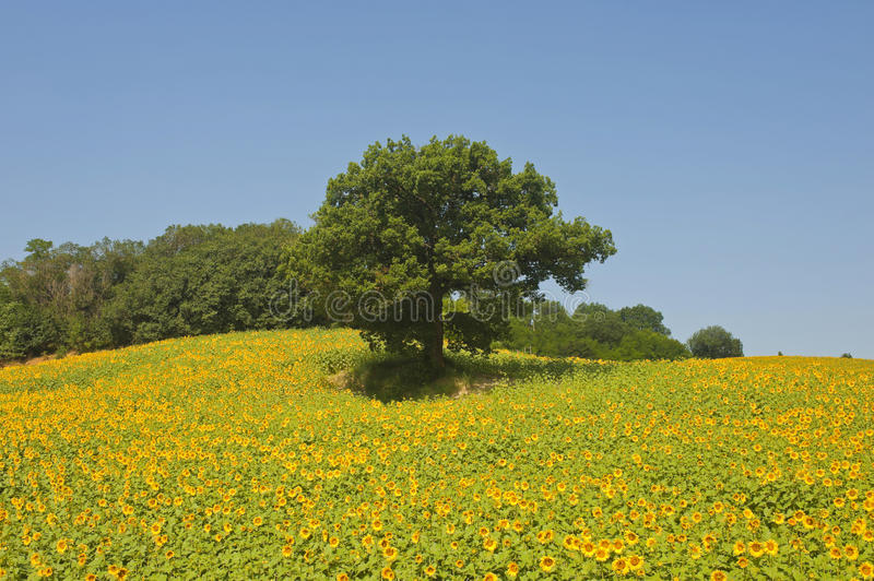 Download Montefeltro (Marches, Italy), Landscape At Summer Stock Image - Image: 20938201