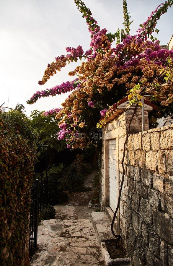 Montenegro Staden av Perast gator av gamla Perast arkivfoton