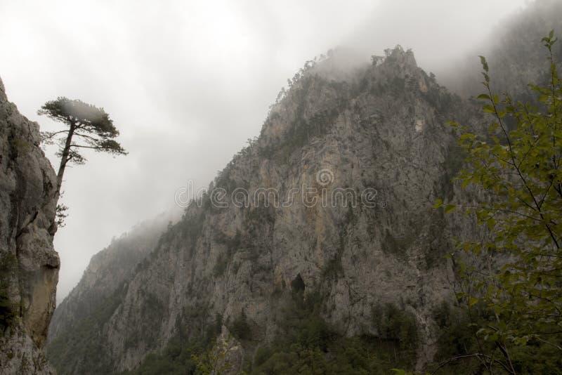 montenegro Stationnement national de Durmitor Tara River Canyon image libre de droits