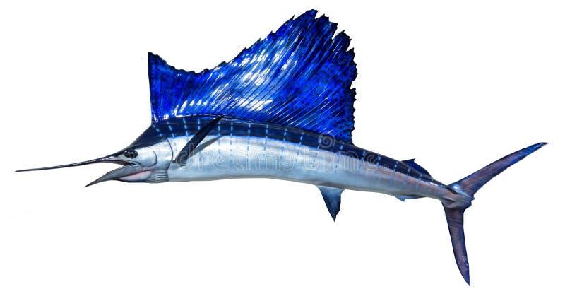 Monterad Sailfish arkivfoton