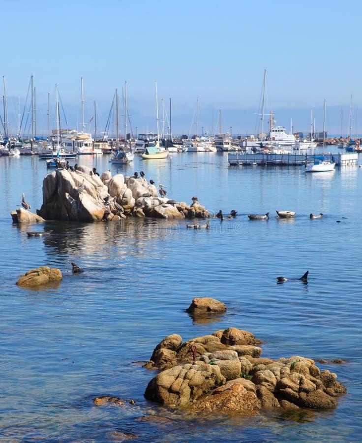Monterey fotografia de stock royalty free