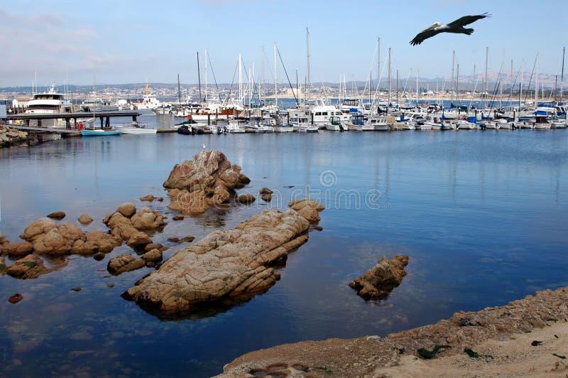 Download Monterey Bay stock image. Image of sail, harbor, seaside - 1138539