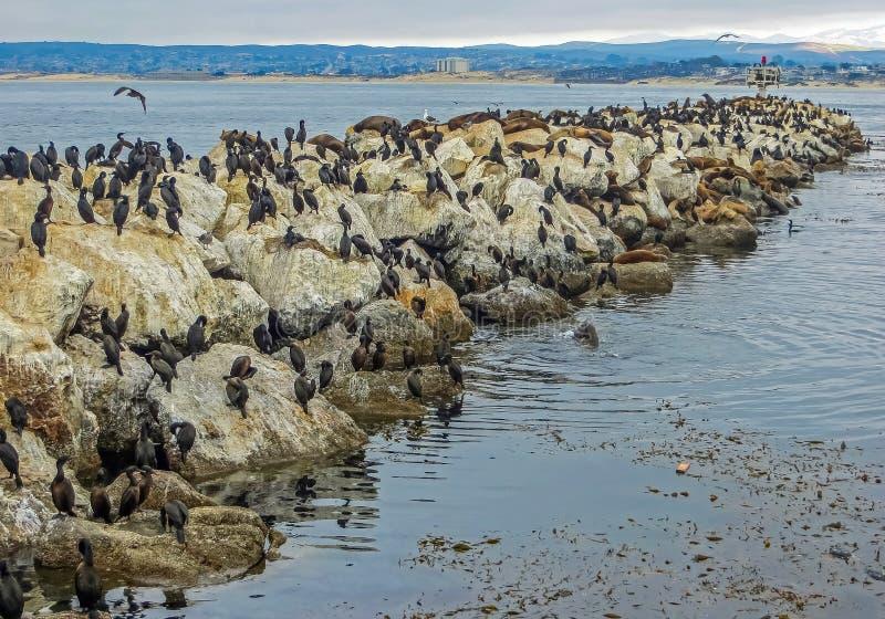 Monterey Bay, CA USA - Fisherman`s Wharf Sea Lions royalty free stock images