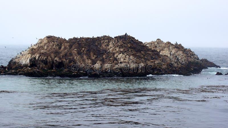 MONTEREY, KALIFORNIA STANY ZJEDNOCZONE, OCT, - 6, 2014: Ptak skała jest jeden popularne przerwy wzdłuż 17-Mile przejażdżki zdjęcie royalty free