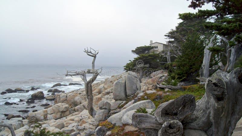 MONTEREY KALIFORNIEN, FÖRENTA STATERNA - OKTOBER 6, 2014: Den ensamma cypressen som ses från det 17 mil drevet, i Pebble Beach, C arkivbild